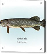 Northern Pike Acrylic Print by Ralph Martens