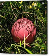 Old Basketball In The Grass Acrylic Print by Robert Sawin