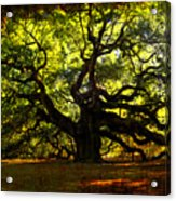 Old Old Angel Oak In Charleston Acrylic Print by Susanne Van Hulst