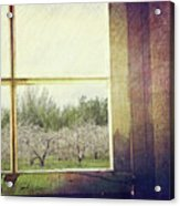 Old Window Looking Out To Apple Orchard Acrylic Print by Sandra Cunningham