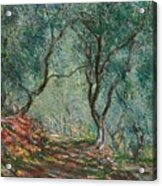 Olive Trees In The Moreno Garden Acrylic Print by Claude Monet