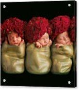 Olivia, Alice, Hugo, Imogin-rose & Mya As Roses Acrylic Print by Anne Geddes