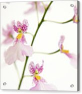Oncidium Orchid Flowers Acrylic Print by Julia Hiebaum