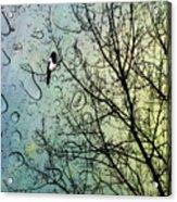One For Sorrow Acrylic Print by John Edwards
