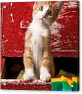 Orange Tabby Kitten In Red Drawer  Acrylic Print by Garry Gay