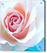 Orange White Blue Abstract Rose Acrylic Print by Artecco Fine Art Photography