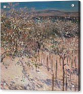 Orchard With Flowering Apple Trees Acrylic Print by Gustave Caillebotte