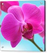 Orchid At The Ocean Closeup Acrylic Print by Michi Sherwood