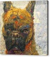 Oscar The Boxer Acrylic Print by Karla Kriss