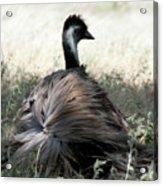Ostracized Ostrich Acrylic Print by Douglas Barnard