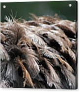 Ostrich Feathers Acrylic Print by Teresa Blanton