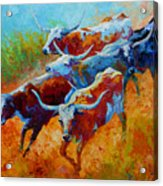 Over The Ridge - Longhorns Acrylic Print by Marion Rose