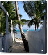 Palm Alley Acrylic Print by Karen Wiles