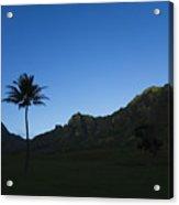 Palm And Blue Sky Acrylic Print by Dana Edmunds - Printscapes