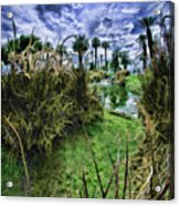 Palm Desert Sky Acrylic Print by Blake Richards