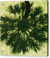 Palm Shadow Acrylic Print by Richard Mansfield