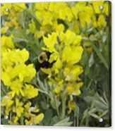 Panorama Hills Bluffs Bee Painting Acrylic Print by Donna Munro