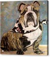 Pastel English Brindle Bull Dog Acrylic Print by Patricia L Davidson