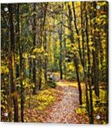 Path In Fall Forest Acrylic Print by Elena Elisseeva