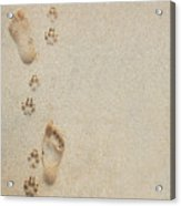 Paw And Footprints 2 Acrylic Print by Brandon Tabiolo - Printscapes