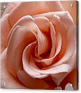 Peach-colored Rose Acrylic Print by Sean Griffin