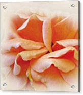 Peach Delight Acrylic Print by Kaye Menner