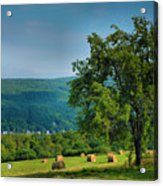 Pear Tree And Hayfield Acrylic Print by Steven Ainsworth