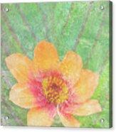 Perfect Peach Acrylic Print by JQ Licensing