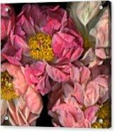 Petticoats Acrylic Print by Christian Slanec