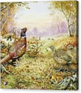 Pheasants In Woodland Acrylic Print by Carl Donner