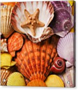 Pile Of Seashells Acrylic Print by Garry Gay