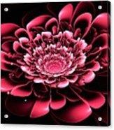 Pink Flower Acrylic Print by Anastasiya Malakhova