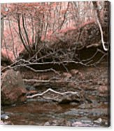 Pink Forest Acrylic Print by Svetlana Sewell