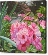 Pink Geraniums Acrylic Print by Lea Novak