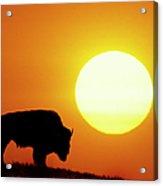 Plains Bison (bison Bison), Digital Composite Acrylic Print by Altrendo Nature