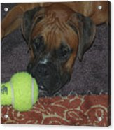 Please Play With Me Acrylic Print by DigiArt Diaries by Vicky B Fuller