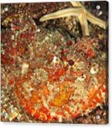 Poisonous Stone Fish, Scorpaena Mystes Acrylic Print by James Forte