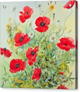 Poppies And Mayweed Acrylic Print by John Gubbins