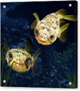 Porcupine Puffer  Acrylic Print by Thanh Thuy Nguyen