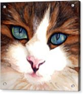 Portrait Of A Cat Acrylic Print by Janine Riley