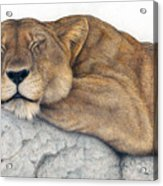 Power And Grace At Rest Acrylic Print by Pat Erickson