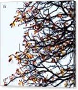 Praha Tangled Tree Acrylic Print by Shawn Wallwork