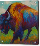 Prairie Muse - Bison Acrylic Print by Marion Rose