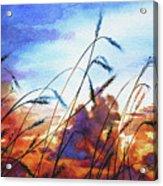 Prairie Sky Acrylic Print by Hanne Lore Koehler
