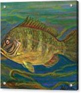 Predatory Fish Acrylic Print by Anna Folkartanna Maciejewska-Dyba