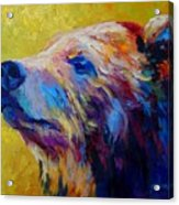 Pretty Boy - Grizzly Bear Acrylic Print by Marion Rose