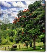 Pretty Countryside Acrylic Print by Kaye Menner