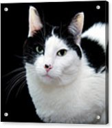 Pretty Kitty Cat 1 Acrylic Print by Andee Design