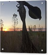 Public Art At Sun Rise Acrylic Print by Sven Brogren
