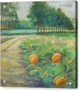 Pumpkin Patch Acrylic Print by Leslie Alfred McGrath